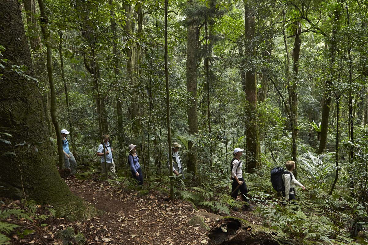 Walk to Mount Mitchell on Day One of your Scenic Rim Trail itinerary, with Great Walks of Australia.