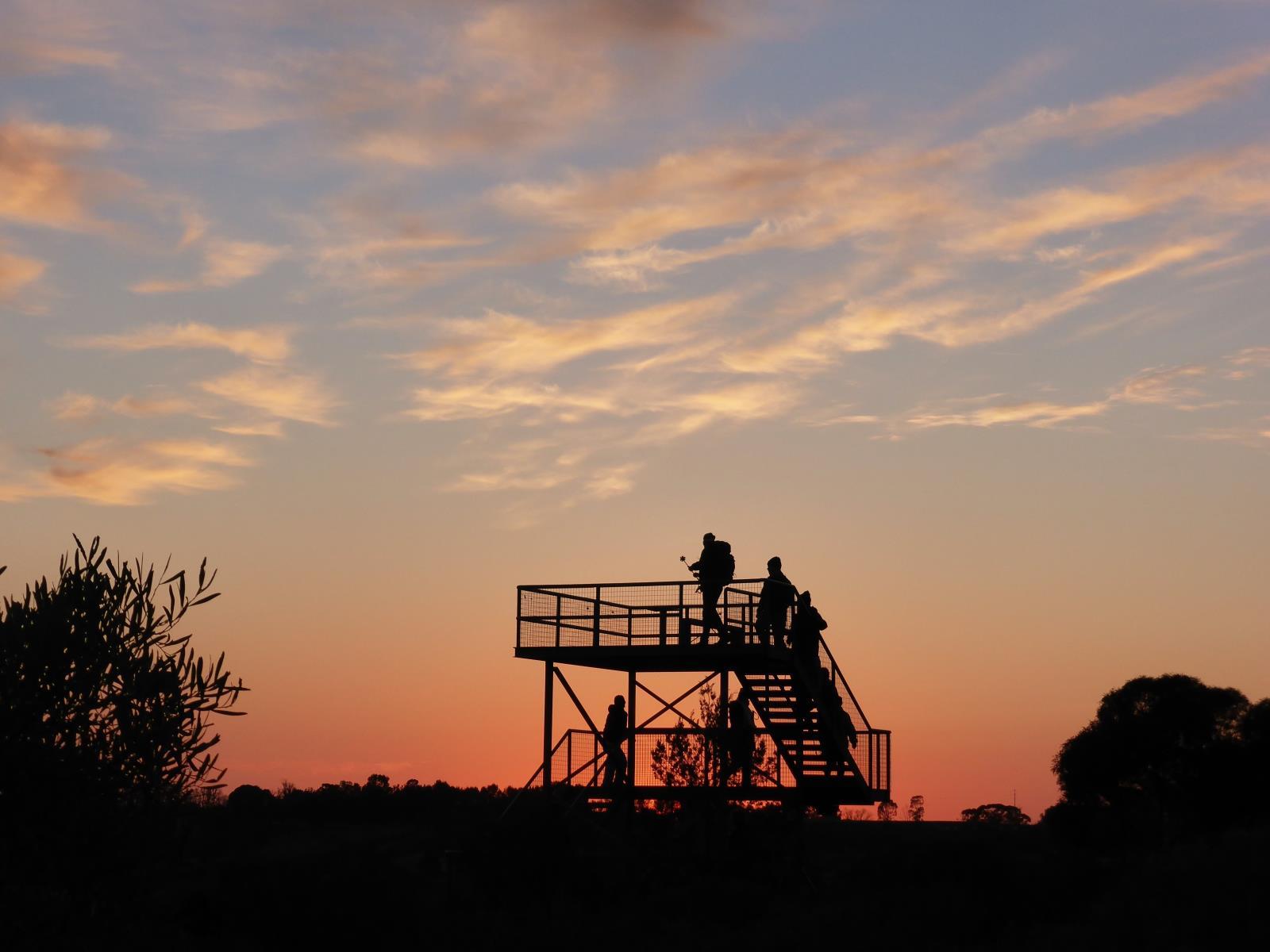 Sunrise walk on the Murray River